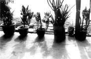 La terrasse à l'aube